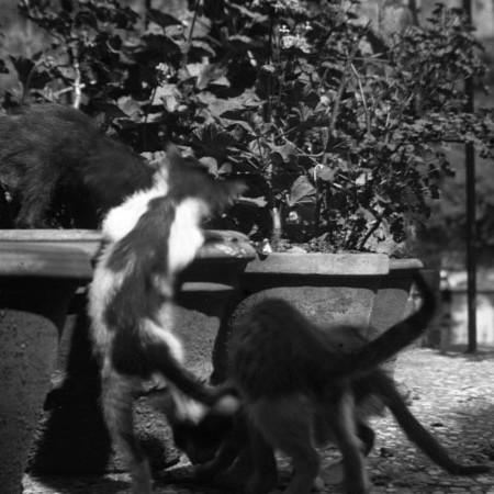 Gatti terrazzo famiglia Bellegotti 1901