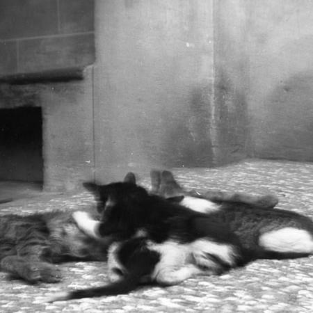 Gatti di casa Bellegotti 1901